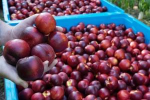 15 1324 QFM Fruits 0095
