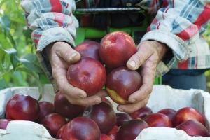 15-1324-qfm-fruits-0082